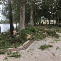 Lake Eola Debris