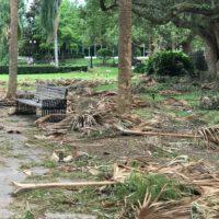 Lake Eola Park Debris